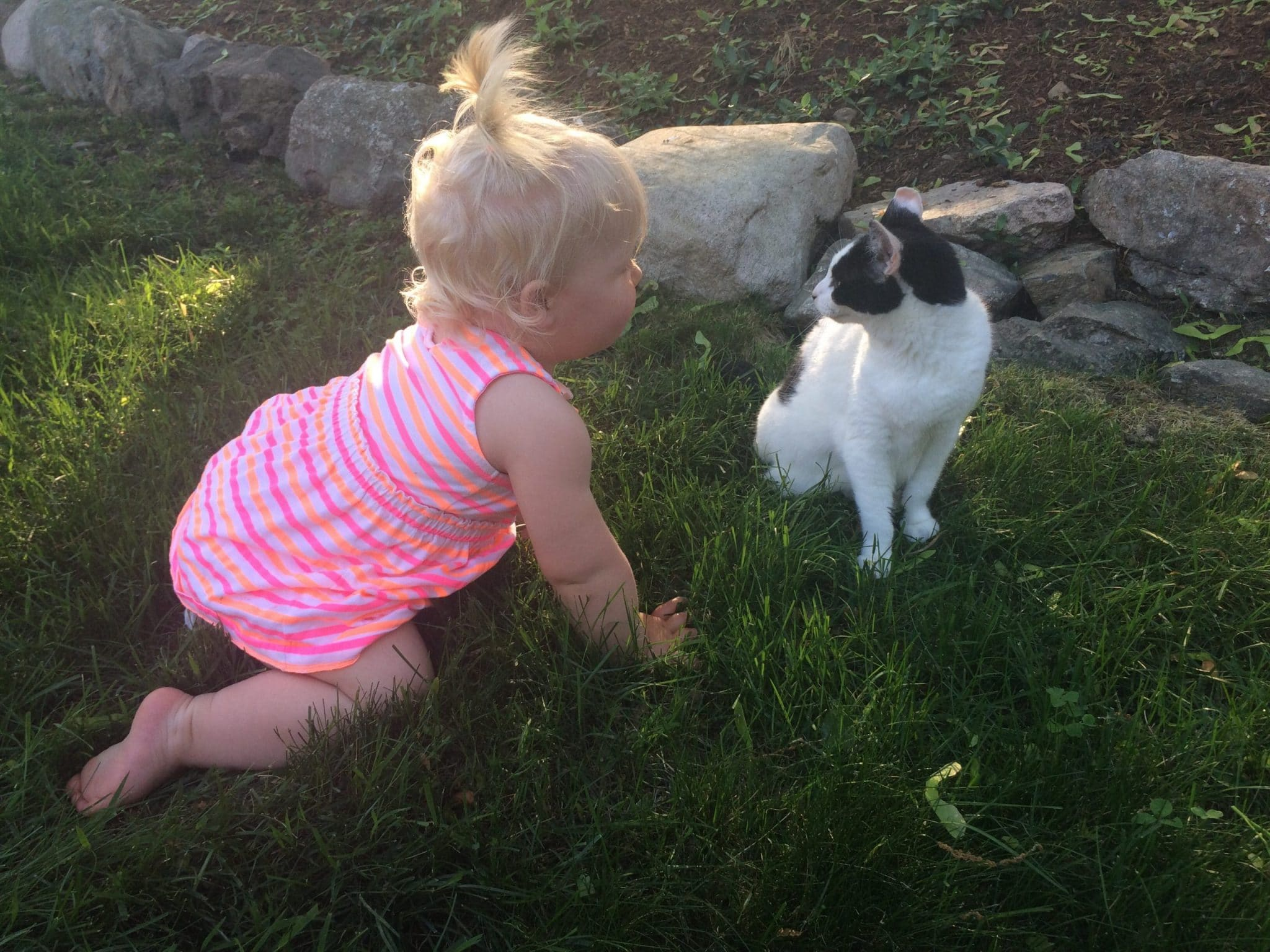 Baby girl and black and white cat.