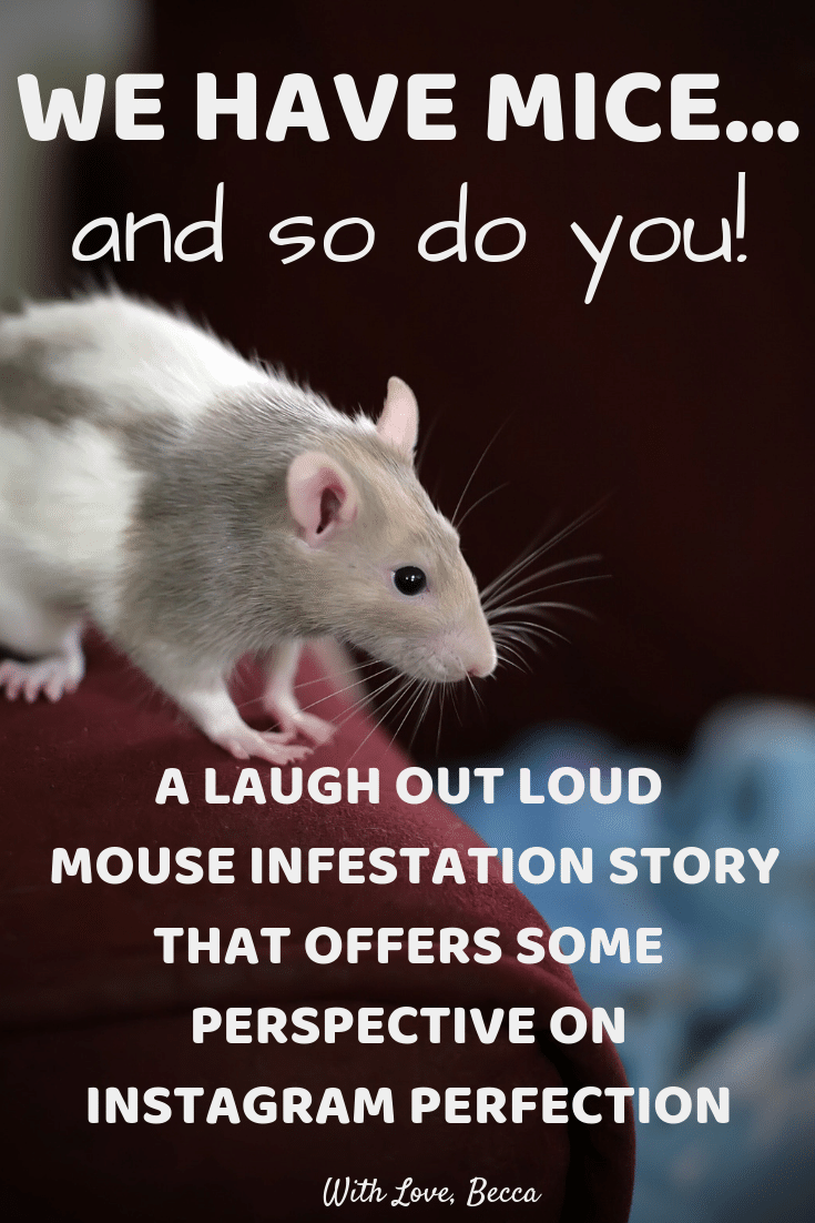 We have mice... and so do you. A laugh out loud mouse infestation story that offers some perspective on Instagram perfection. #humor #funny #notperfect